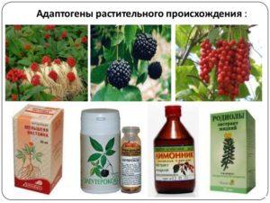 Адаптогены растительного происхождения