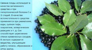 Использование черноплодной рябины