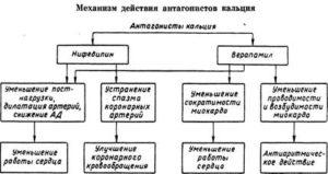 Механизм действия антогонистов кальция