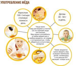Сколько можно употреблять меда